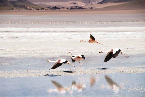Laguna Grande, Puna, Argentina