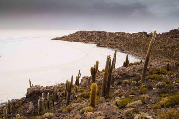 Isla de Incahuasi, Salar de Uyuni, Bolivia